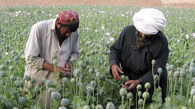 opium harvest 2
