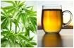 marihuana-alcohol615