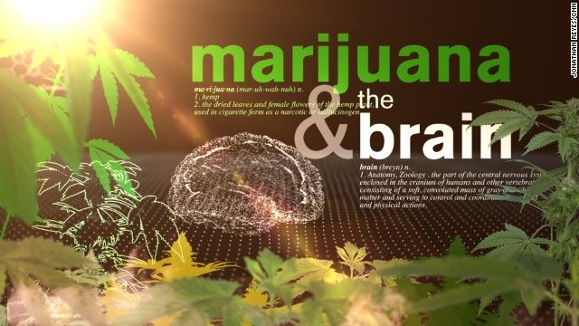Cannabis Patients Alliance: This Is Your Brain & Body On Cannabis (Video)