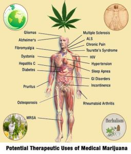 Potential Therapeutic Uses of Medical Marijuana