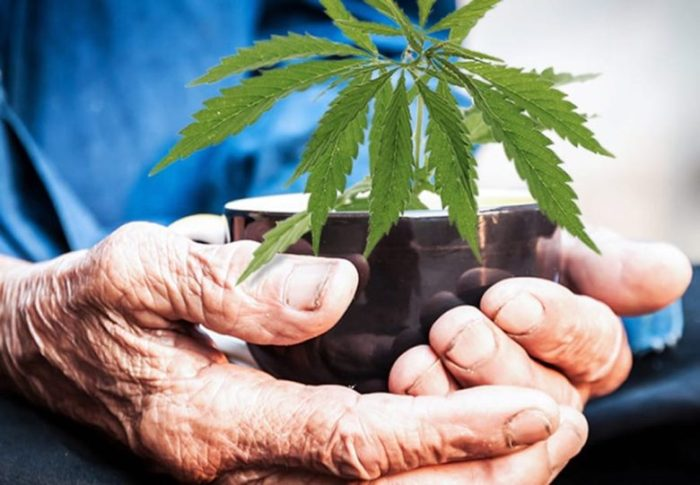 wsi-imageoptim-medical-cannabis-for-the-elderly-www.endoca.com_-780x541